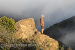 Hiker in Temescal Canyon sees fog