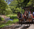 Tourists sightsee with Waipio Valley Wagon Tours