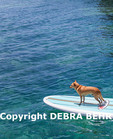 Small dog on paddle board on the Big Island