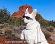 White German Shepherd wearing sunglasses, with Bell Rock in background