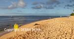 Golden light illuminates monk seal beached on Kauai