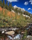 Autumn colors along Rock Creek in the Eastern Sierra