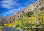 Autumn color in Lundy Canyon