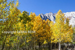 Autumn color behind Convict Lake