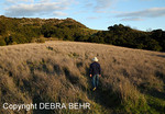 Hiker on meadow trail at Trippet Ranch in Topanga State Park at sunset