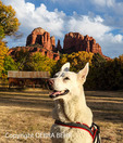 White German Shepherd at Red Rock Crossing in Sedona