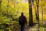 Hiker walks by autumn leaves at the West Fork of Oak Creek Trail