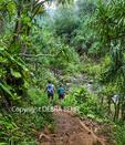 Hikers on the Kalalau Trail near Hanakapiai Stream