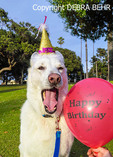 Dog with Happy Birthday hat and balloon