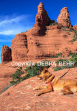 Dog at Chicken Point in Sedona