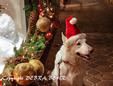 Dog wearing Santa hat at Tlaquepaque in Sedona