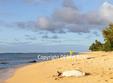 Hawaiian monk seal resting near Tunnels Beach on Kauai