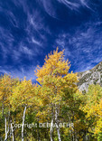 Lundy Canyon in autumn