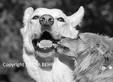 Dog kisses best buddy