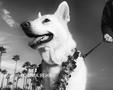 Happy dog on leash