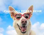 Dog wearing sunglasses in Santa Monica, California