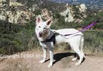 Dog at Red Rock Canyon Park in Topanga, California