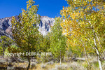 Autumn color behind Convict Lake in the Eastern Sierra