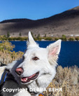 Dog hiking by Convict Lake in the Eastern Sierra