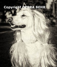 White German Shepherd wearing a wig and tiara