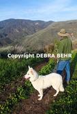 Hiker and dog on the Ridge-Canyon Access Trail at Zuma Canyon
