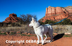 Dog on hike, with Bell Rock and the Courthouse Butte in the distance
