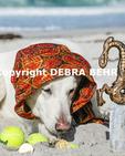 Dog pirate sniffs treasures