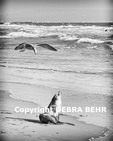 California sea lion and sea gull at Venice Beach