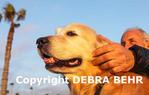 Man petting his dog