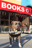 Dog wearing sunglasses on the Venice boardwalk