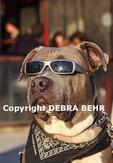 Dog wearing sunglasses on the Venice boardwalk