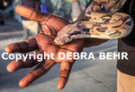 Snake fancier at the Venice boardwalk