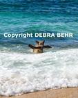 German shepherd retrieves large stick  at Maui beach
