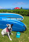 Rescue dog adopted on Maui enjoys visit to Kaanapali