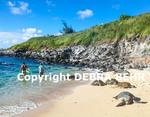 Hawaiian green sea turtles rest at Hookipa Beach while people enjoy sea