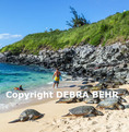 Hawaiian green sea turtles rest at Hookipa Beach while people enjoy sea  (boy is model released; others are not model released)