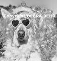 Dog wearing a tiara and wig