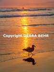 Bird by sea at sunset