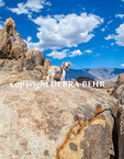 Small dog at Alabama Hills National Recreation Area in Lone Pine, California