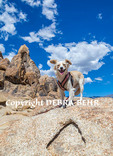 Small dog at Alabama Hills National Recreation Area in Lone Pine, California,