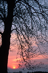 sunset and spring tree buds