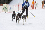 Craftsbury True Companion Sled Dog Race and Benefit. Skijorer at start of race.