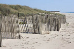 Sand fences on Nantucket beach