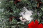 Common Redpoll in Christmas wreath