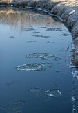 Ice pans or ice circles in Black River