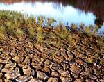 Mud Cracks and Dry Lake Bed