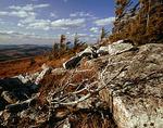 Spruce Knob, West Virginia