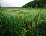 Schollards Run Wetlands