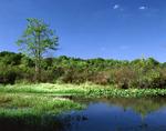 Quakertown Swamp
