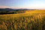 Summer Hay Fields